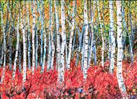 Birches - horizontal