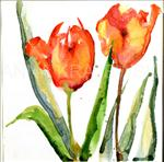 Tulips on White